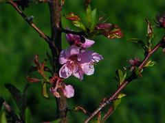 floriiroz2010_0421_083555(2)