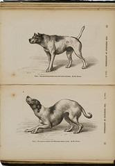 Dog approaching another dog with hostile intentions, by Mr. Riviere. The same in a humble and affectionate frame of mind, by Mr. Riviere