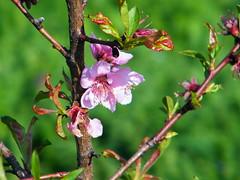 Fuji_spring_voluntar2010_0421_083555