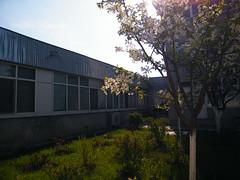 Fuji_spring_voluntar2010_0419_085443