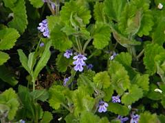 Fuji_spring_voluntar2010_0416_141725