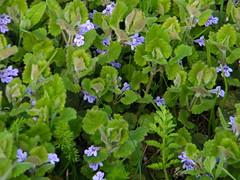 Fuji_spring_voluntar2010_0416_141653