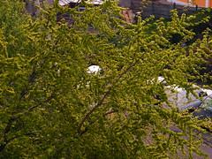 Fuji_spring_voluntar2010_0416_060228
