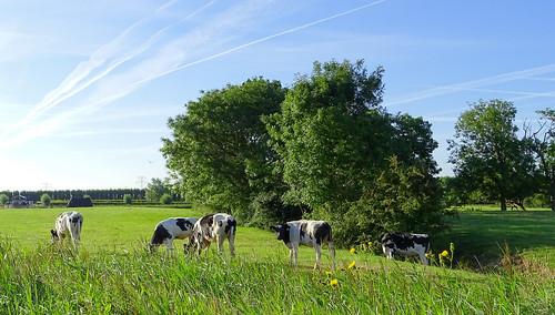 In de polder bij 's gravenpolder