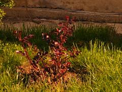 Fuji_spring_voluntar2010_0419_085534