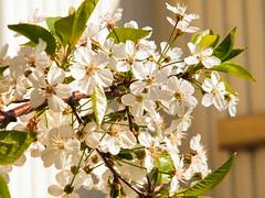 Fuji_spring_voluntar2010_0419_085518