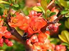 Fuji_spring_voluntar2010_0416_142009