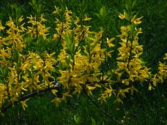 Fuji_spring_voluntar2010_0416_141841