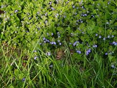 Fuji_spring_voluntar2010_0416_141707