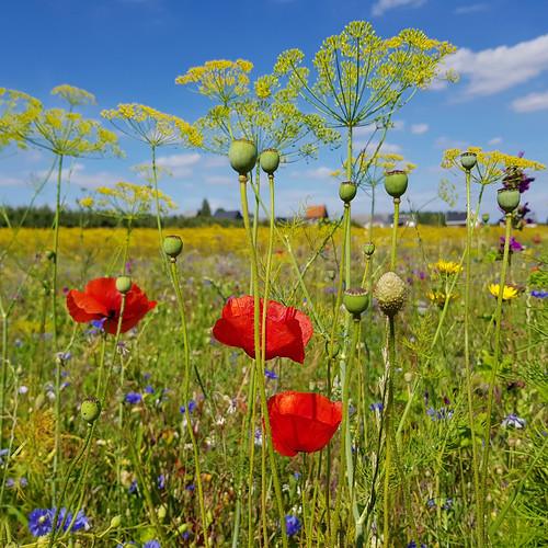 Bucket* of field flowers