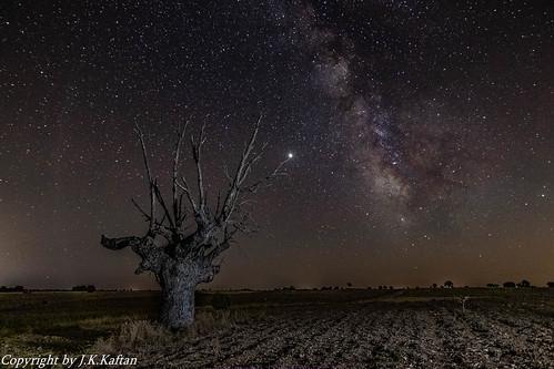 """... and the old Tree watching the Stars ..., ...y el viejo Árbol viendo las Estrellas...""""en Explore"""""""