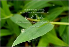 Eckhart Tolle To be aware of little, quiet things, you need to be quiet inside. A high degree of alertness is required