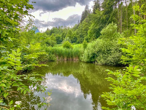 Pond in Thierberg in Tyrol, Austria