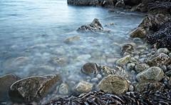 Entre piedras y algas, en Explore 01/08/20