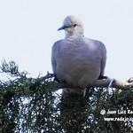 Aves en el Paseo del Norte de La Guardia (Toledo) 1-8-2020