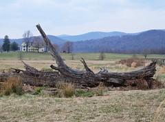 Rappahannock County Landscape with House
