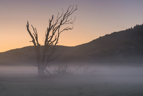 *the dead tree in the morning mist*
