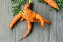 Unusually shaped orange carrots, top view