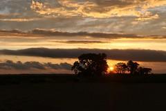 Orange sunset behind the tree silhouettes | Silhouette des arbres devant le coucher de soleil orangé