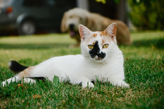 Portrait of beautiful cat sitting on the grass.
