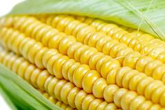 Close-up, fresh raw sweet corn