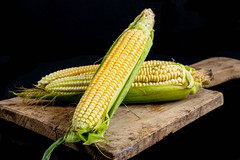 Fresh heads of sweet corn with leaves on dark background