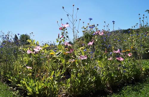 2020 08 01Klosterpark Altzella Blumen (7)
