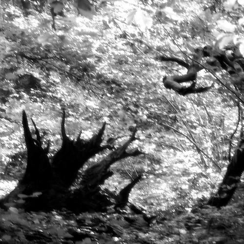 Dans le bois de charmes