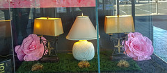 Lampshades on Display