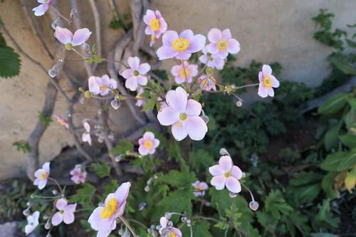 2020 08 01Klosterpark Altzella Blumen (4)