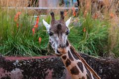 Gaia Zoo ( August 2020)