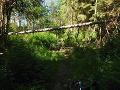 June 24, 2020 MTB ride to Skansehytta