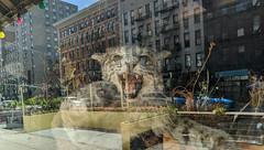 Wildcat on Third Avenue