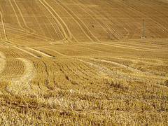 3rd August 2020 -  Harvest time (fruit, vegetable or flower) - Day 1 - wheat fields after being harvested