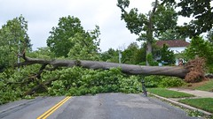 Tree Down On Continental