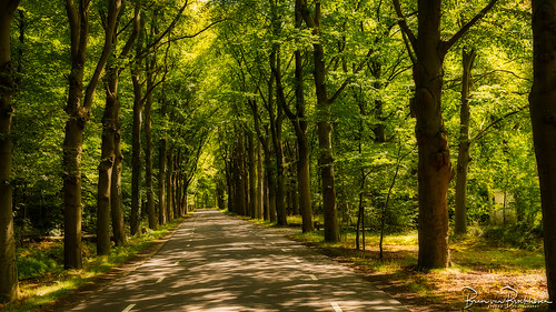 Cycling through an August summer forest