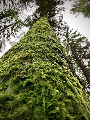 forest take a deep breath
