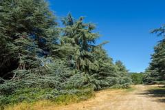 3264 Arboretum de Versailles-Chèvreloup