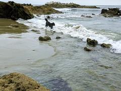 Benni back at the beach!
