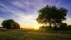Bucolic sunset (10 minutes before sunset)