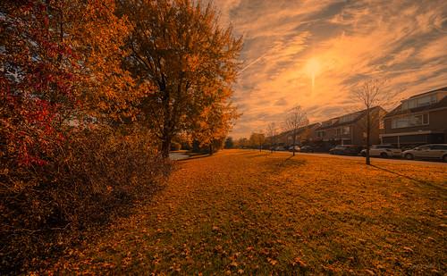 Golden Tree Tops alongside Brabantlaan, Vught.