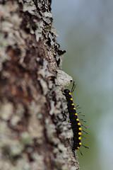 Climbing up the tree