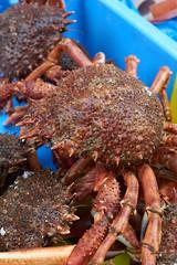 Brittany market - crab