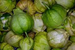5th August 2020 -  Harvest time (fruit, vegetable or flower) - Day 4 - crop of tomatillos