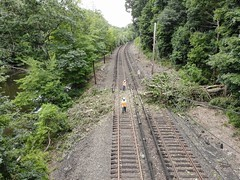 Metro-North Isaias Tree Clearance