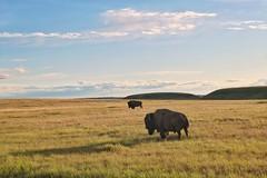 Prairies' locals | Habitants des Prairies