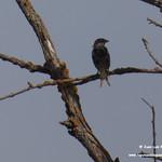 Aves e insectos en las lagunas de La Guardia (Toledo) 7-8-2020
