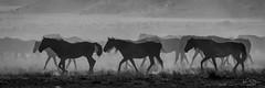 2020 Aug 6 West Desert