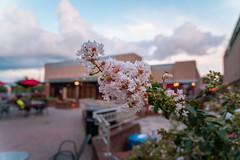 Strip-mall Flowers