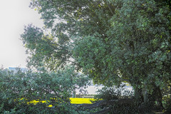 A WALK ALONG THE PROMENADE [CLONTARF]-165235